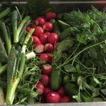Intercatering-Food-pictures-week-menu-salad-bar-fresh-garden