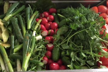 Intercatering-Food-pictures-week-menu-salad-bar-fresh-garden